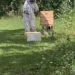 Checking Our Bees